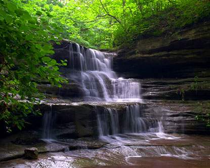 Starved Rock Forest Therapy